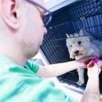 Pet Friend veterinarska ordinacija Beograd