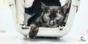Pet Friend veterinarska ordinacija Beograd